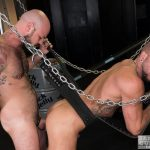 Bareback Cum Pigs Dolf Dietrich and Rogue Status Breeding 16 150x150 Dolf Dietrich Gets Bareback Fucked In A Sling By Rogue Status